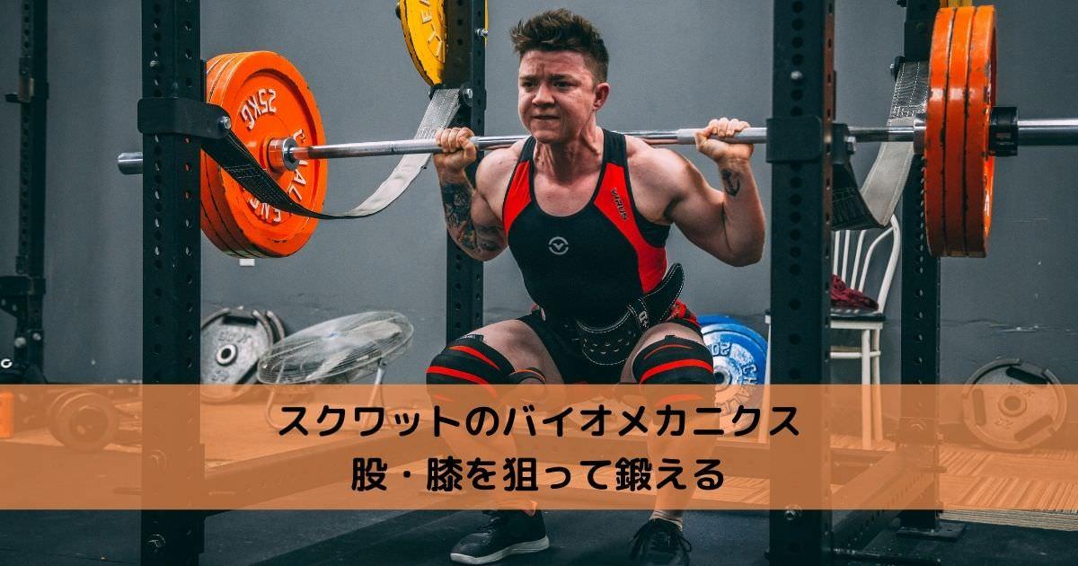 スクワットのバイオメカニクス【股・膝を狙って鍛える】