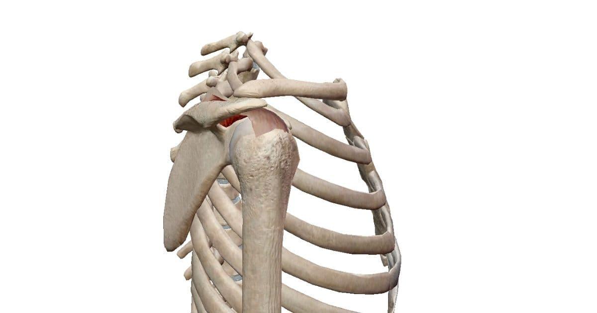 肩解剖2 横